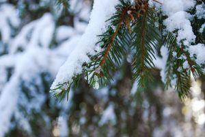 Что будет, если срубить елку в ростовском парке
